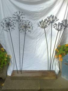 Allium & Agapanthus