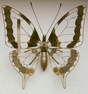 butterfly (with ruler for scale)