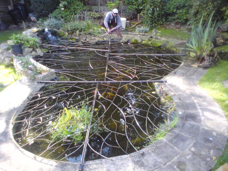 Pond cover Autumn 2016